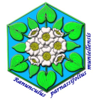 asturias_logo_ranunculus